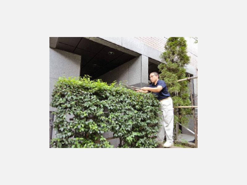 ◆植木剪定・植栽業務