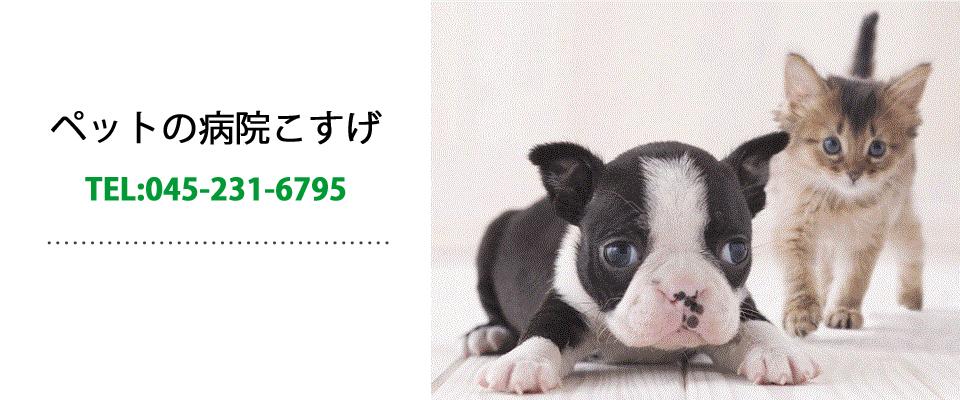 横浜市西区|西横浜駅|動物病院|ペットの病院こすげ