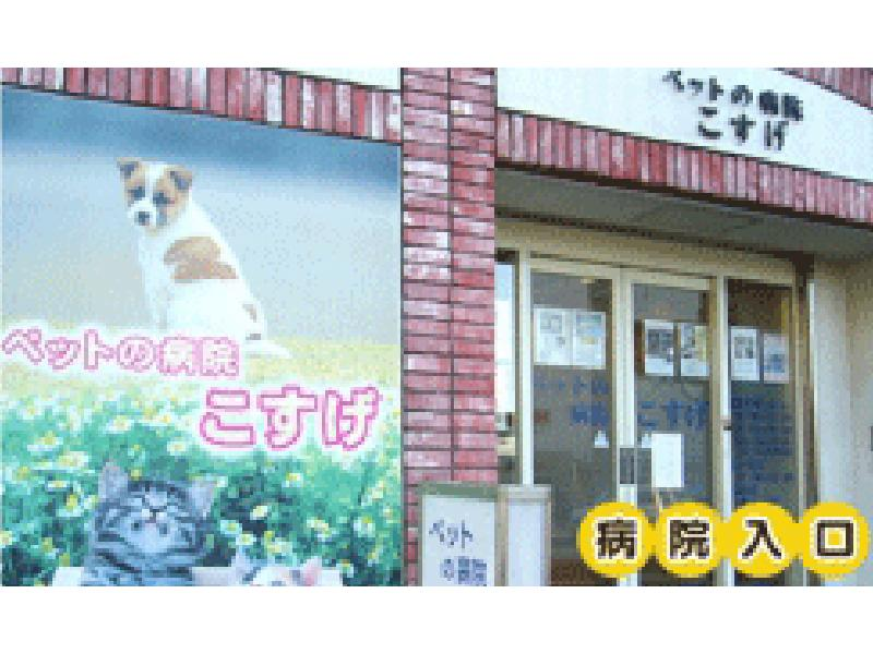 横浜市西区|西横浜駅|動物病院|獣医師|ペットの病院こすげ