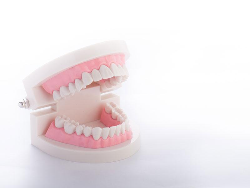 むし歯、歯周病などの治療から歯磨き指導まで取扱い