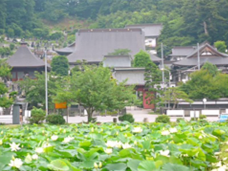 蓮池からの金勝寺の風景
