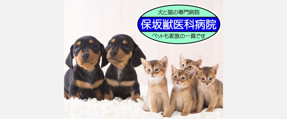 川口市戸塚・東川口駅徒歩12分・犬猫専門の動物病院