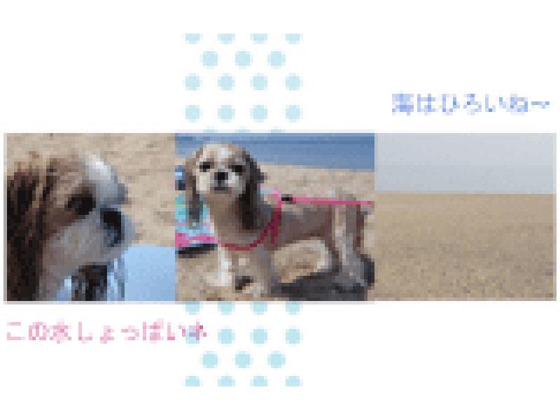 ペットの写真などを編集しフォトブックに仕上げます。