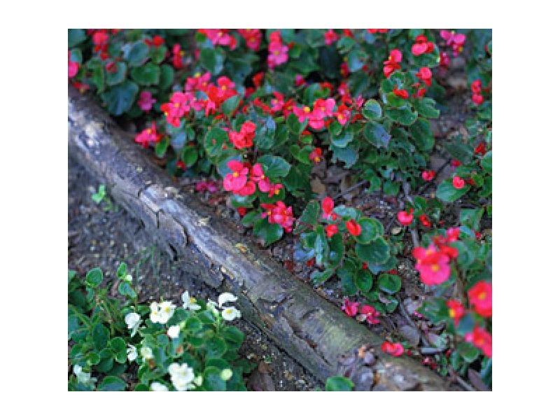 造園工事 植栽 エクステリア 雑草対策 蜂の巣撤去 庭木手入