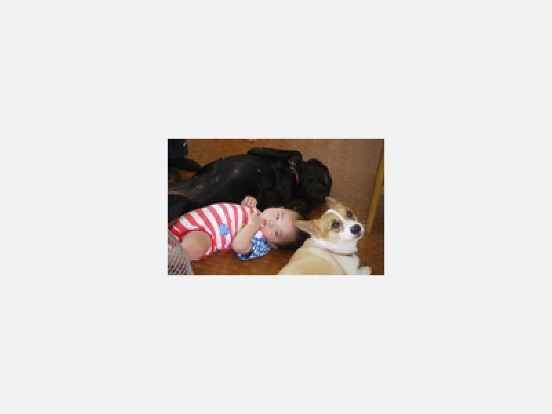 セラピー犬とふれあう赤ちゃん。