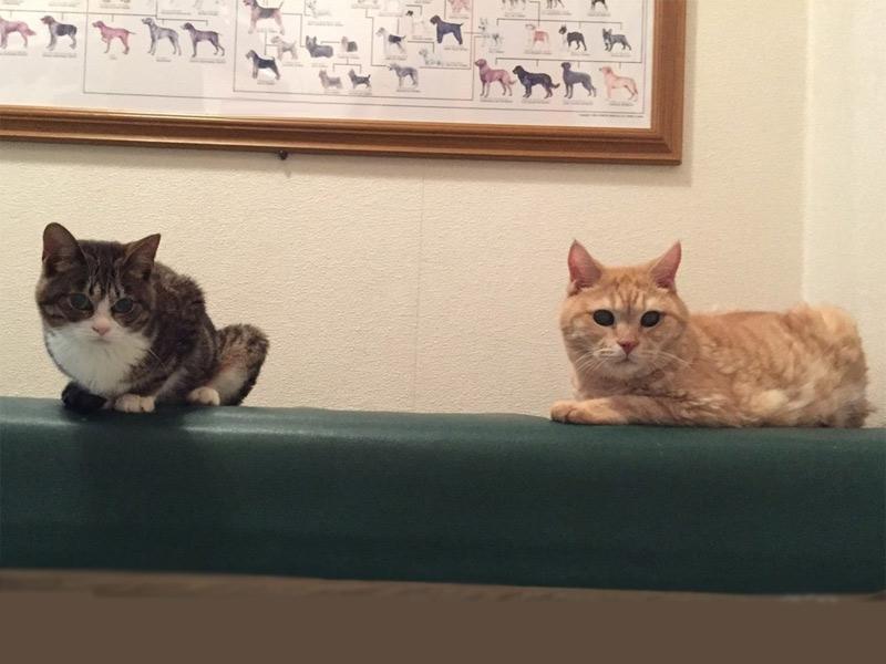 土曜日・日曜日・祝日も診療している宇都宮市の動物病院