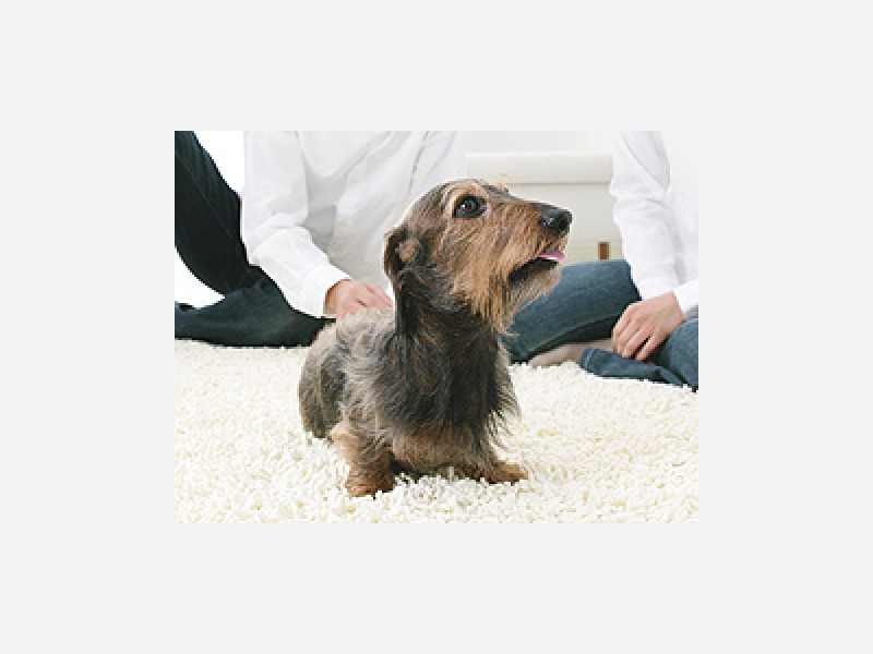 飼い主様とともに愛犬の健康を考えます