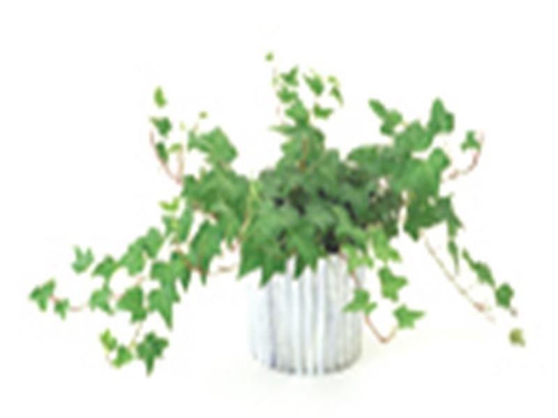 観葉植物もあります