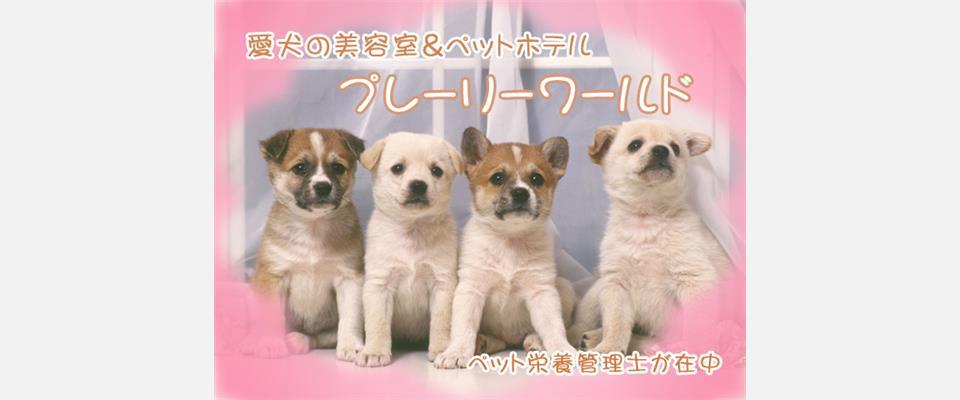 千葉県八街市ペット美容室ペットホテルペットフード
