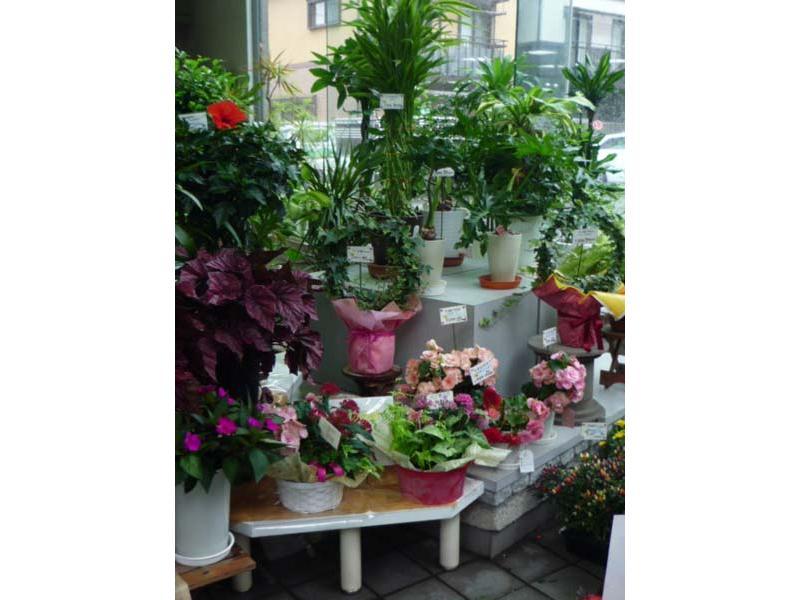 滝とせせらぎのあるアトリウム型の花店。