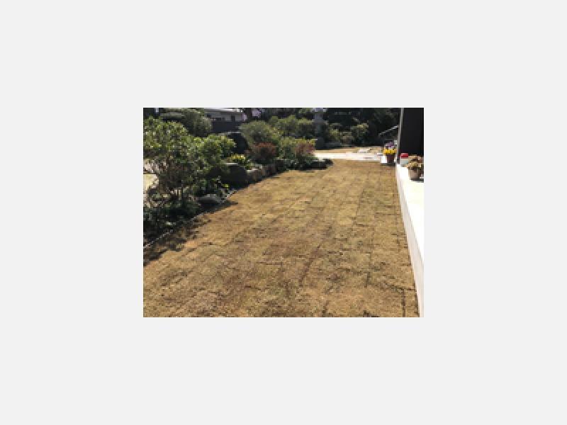 芝は定期的なお手入れが必要です