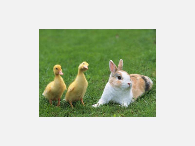 鳥や小動物も診察します