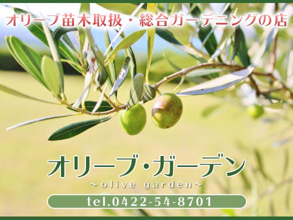 東京都 小金井市 ガーデニング オリーブ 苗 鉢植え