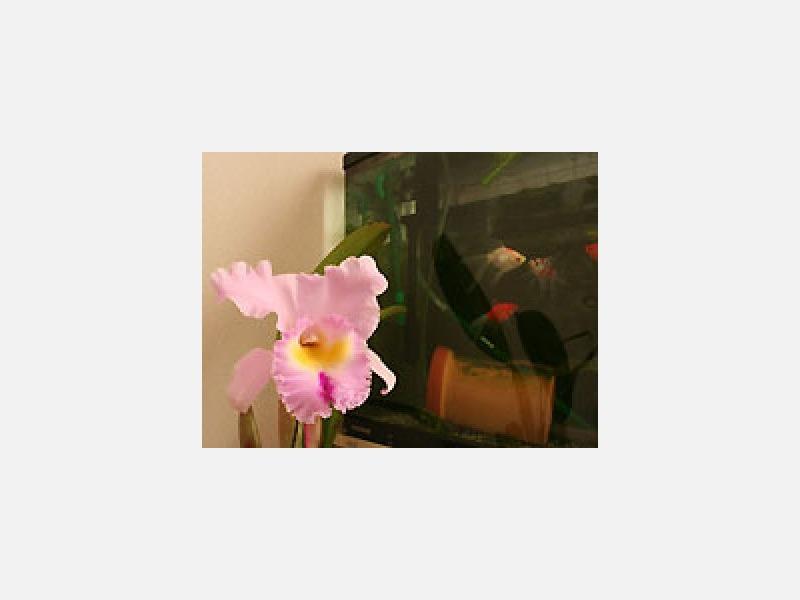 待合室の一角には金魚と花植物