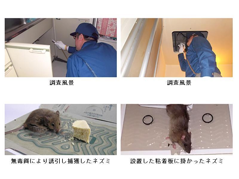 ネズミ調査・毒餌処理・捕獲処理