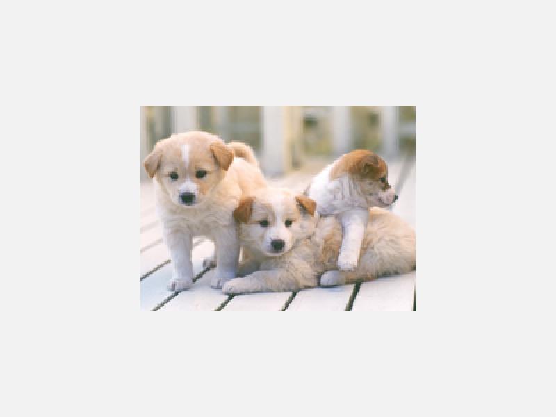 犬、猫、その他小動物は応相談