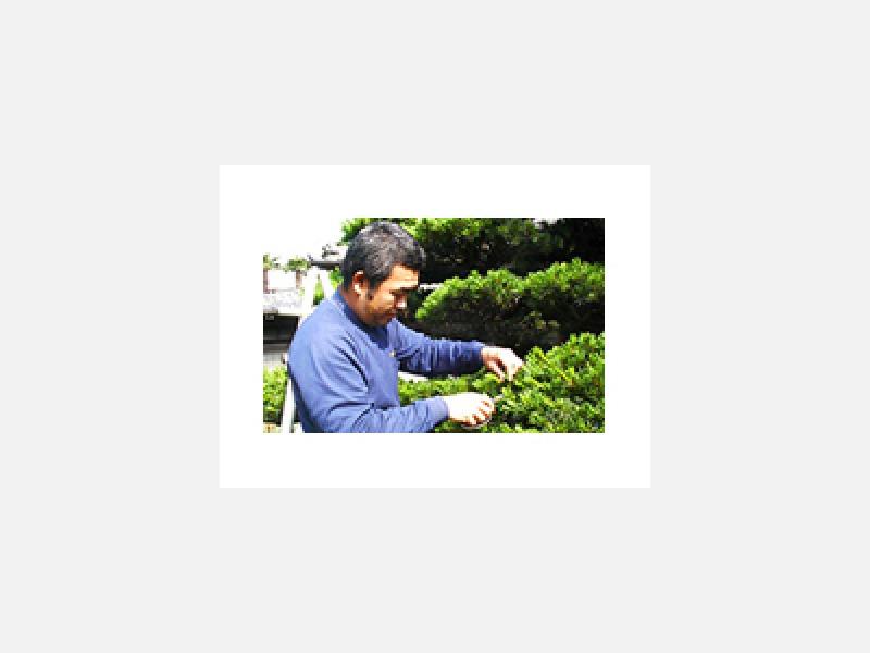 ★植木生産会社の技術と知識で植木の剪定メンテナンス