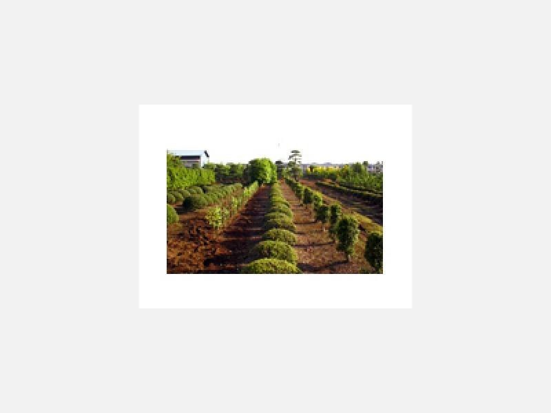 約3000坪の樹木生産畑を完備!常時200種類以上