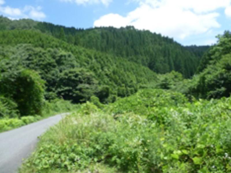 自然あふれる山道