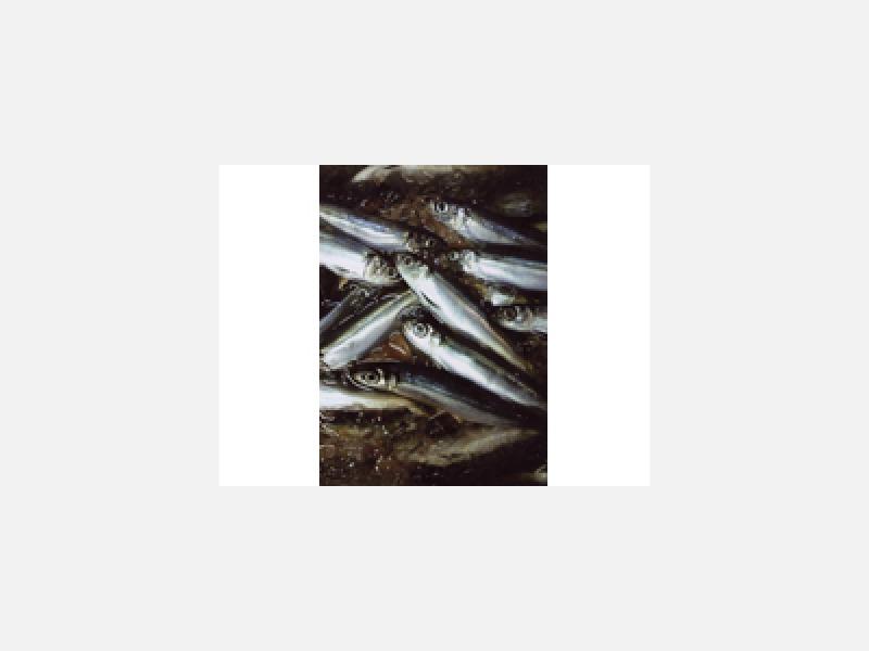 毎日届く牛深からの新鮮なお魚