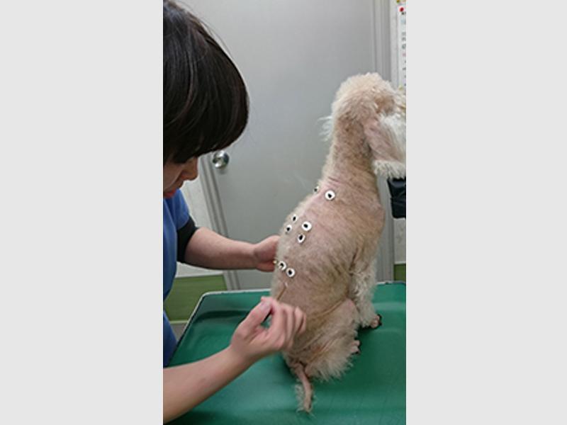 専門知識を持ったプロが鍼灸治療を行います