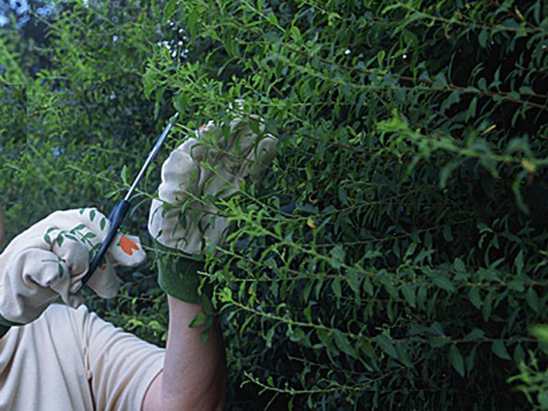 雑草・草刈り・芝刈り・枝切り・庭のお清掃
