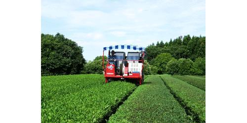 有限会社河野製茶工場ロゴ
