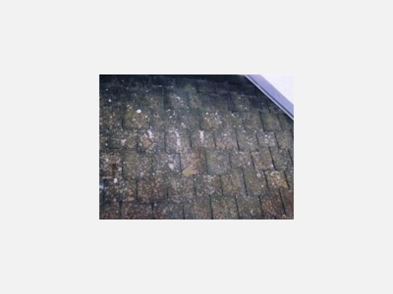 屋根塗装(前)→