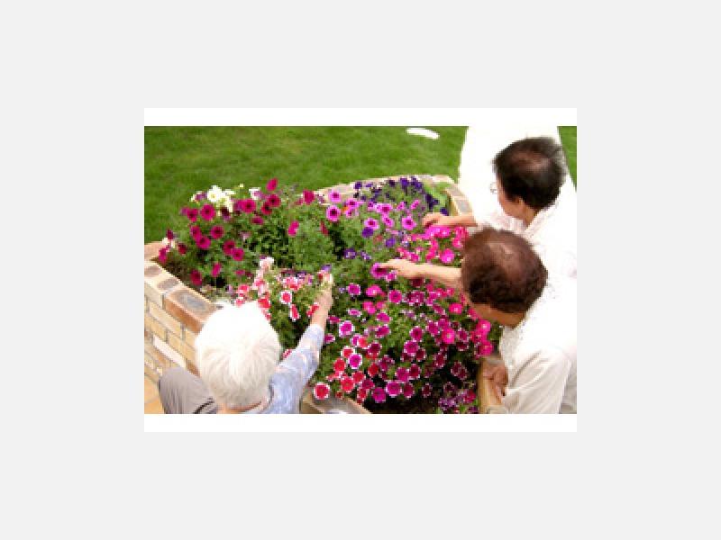 花壇のお花が心を癒してくれます