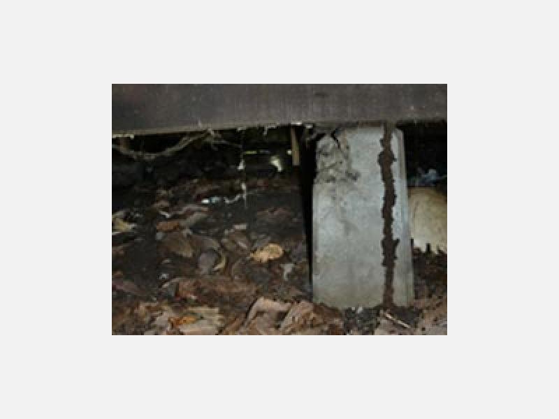 床下の湿気、カビなどへの対策も行います