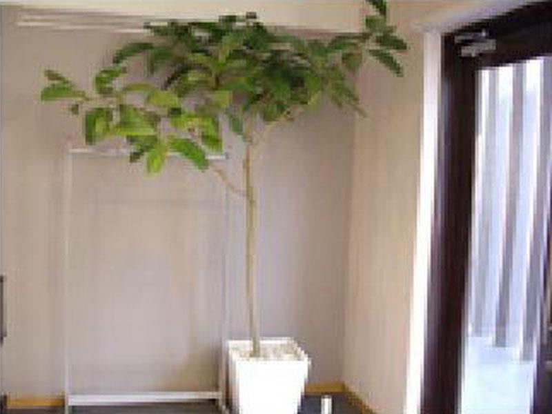 神奈川県の貸植木