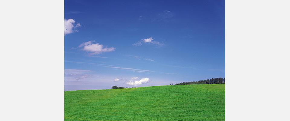 草原と青空の画像