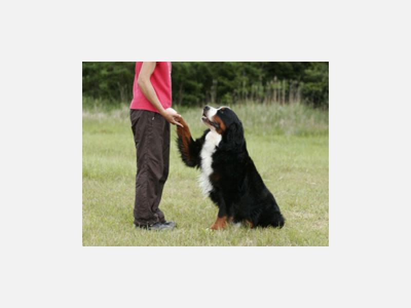 ★愛犬教室 あなたの手で愛犬をしつけしてみませんか