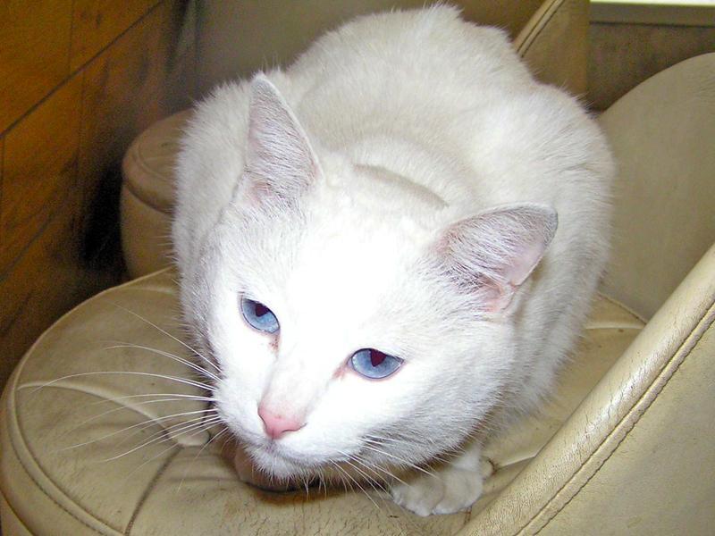 白ネコがお待ちしています