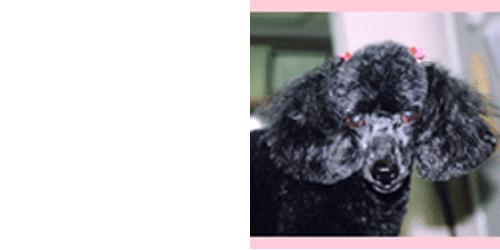 ペットの美容室パピーロゴ