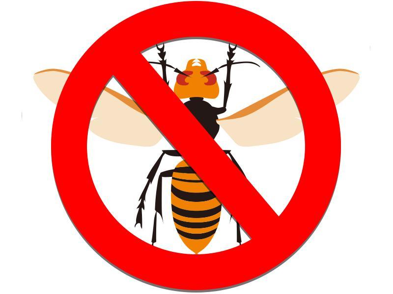 スズメバチの駆除、巣の除去等お任せください