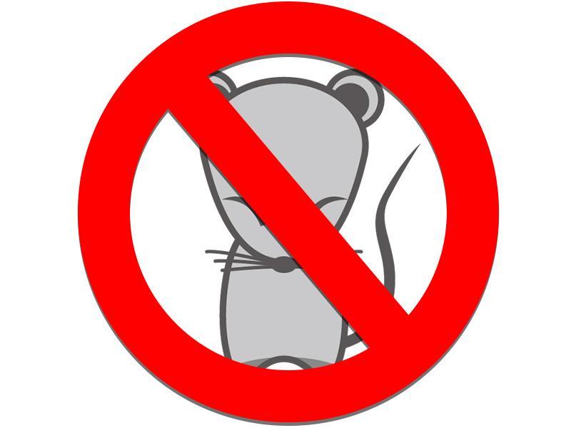 ネズミ、ハクビシン、あらいぐま等の害獣駆除もお任せください