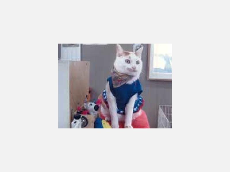 番頭猫『ニャン』