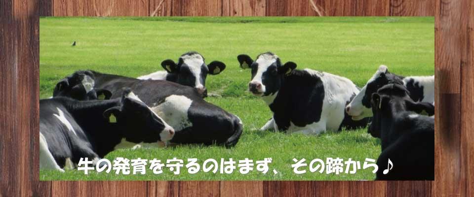 削蹄は牛の健康を守る大切な要素です