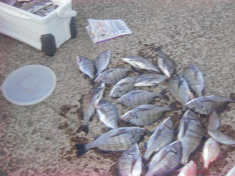 沖カセ釣り