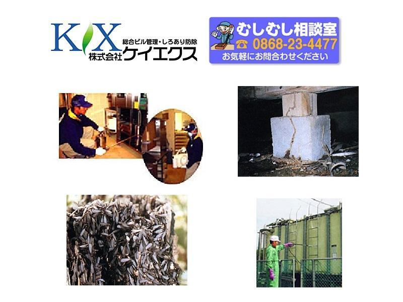 シロアリの発見 土台と柱の被害 貯水槽清掃他お任せください。