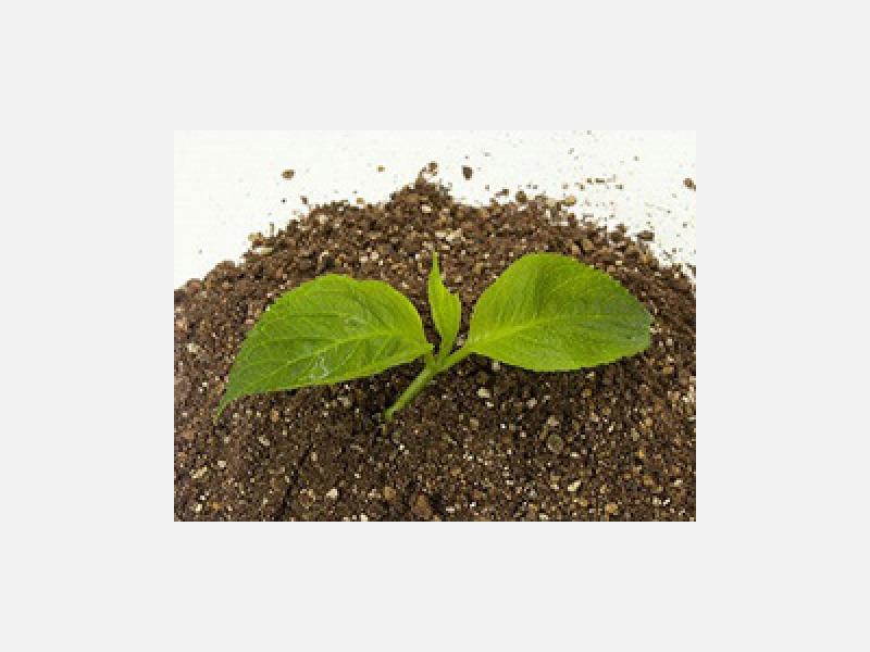 基本となる用土は、天然用土使用