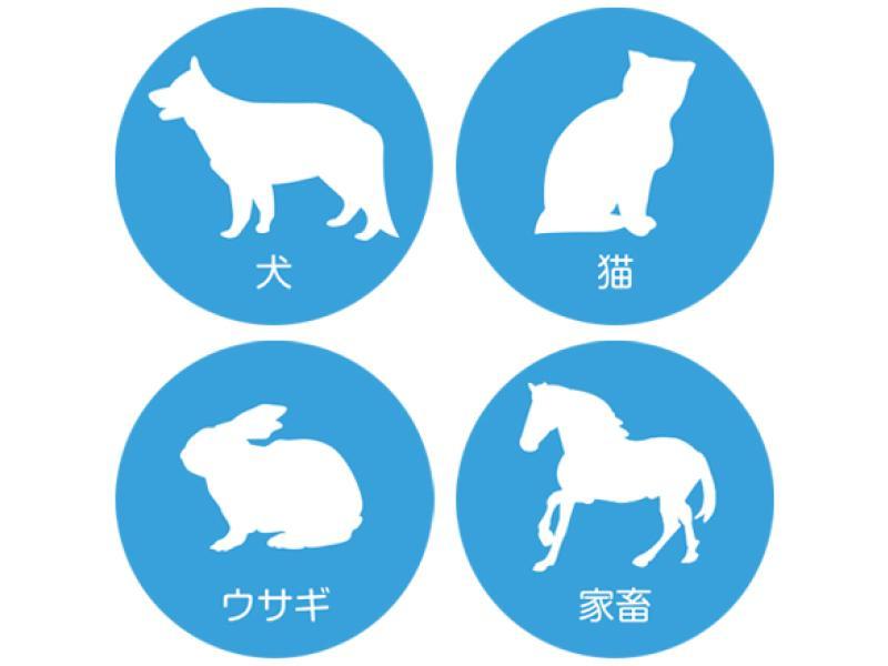Q.犬猫以外にも診療していますか?