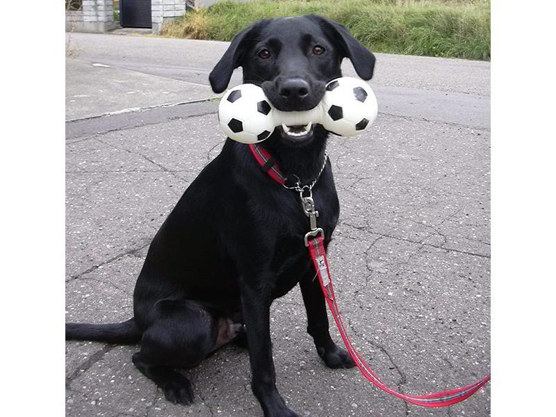 犬の事なら何でも聞いてください!