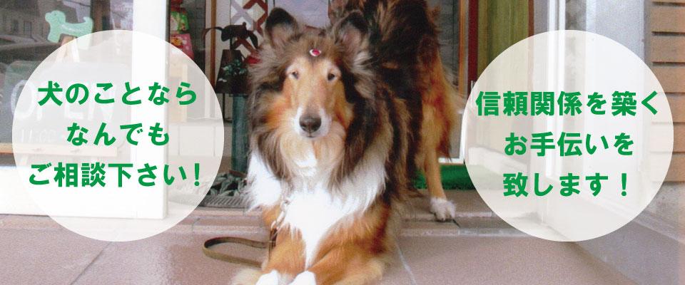 犬の事なら旭川のドッグプライマリースクールウィル