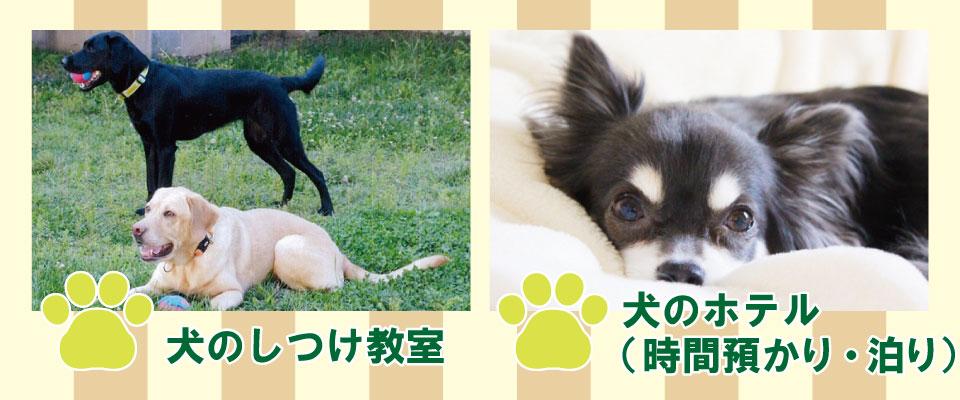 犬のしつけ、犬の保育所(時間預かり)