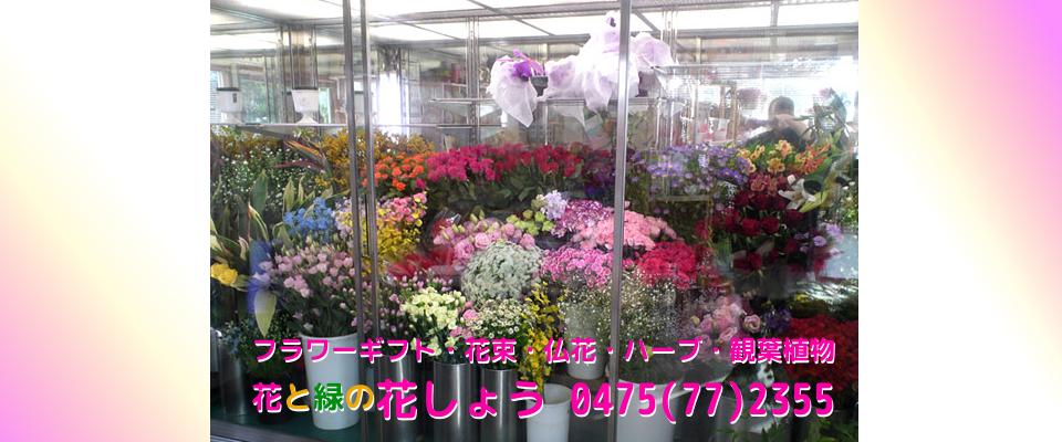 大網白里市 花屋 花束 植木 アレンジメント