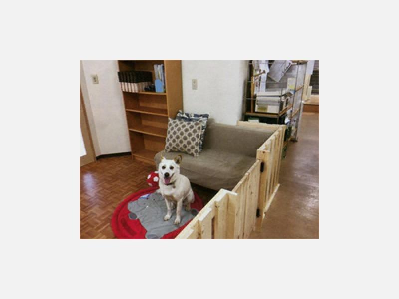 介護ペットホーム(老犬ホーム)サービスを始めました!