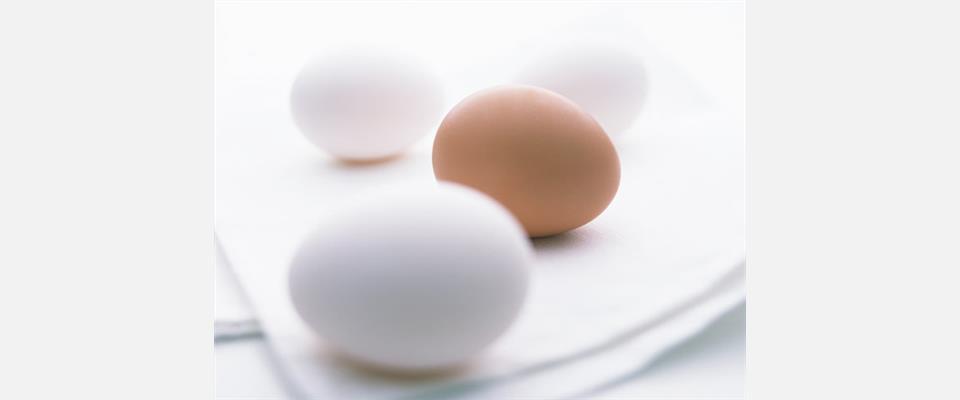 茨城県土浦市 卵 卵卸 卵販売