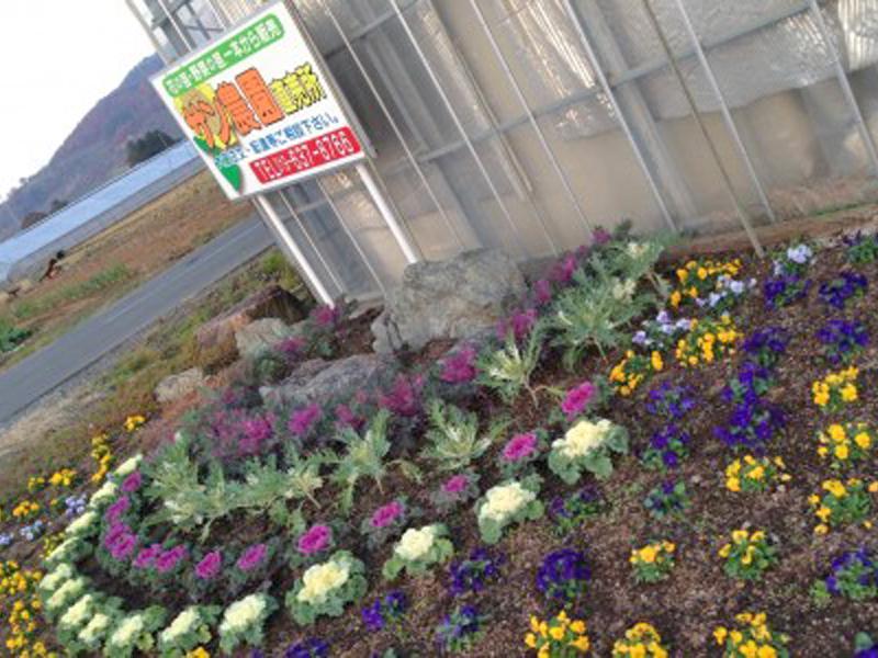 サン農園では花苗・野菜苗を産直販売しています
